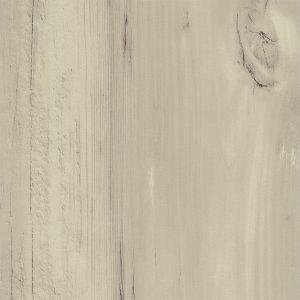 Crescendo 19001 White Asparagus